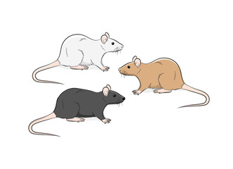 Wild Rat Vector Illustration