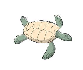 Tortoise Vector Illustration