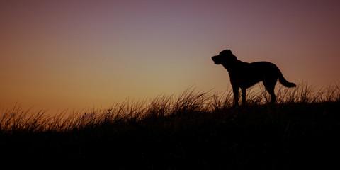 Hund Silhouette in Düne