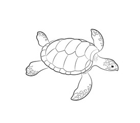 Tortoise Drawing Vector Illustration