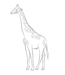 Giraffe Drawing Vector Illustration