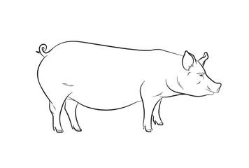 Pig Drawing Vector Illustration