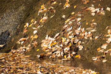 Dry fallen leaves on a concrete weir