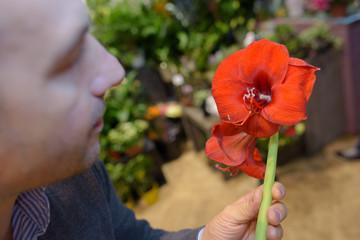 Man holding red amaryllis lily