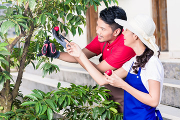 Young Asian couple smiling while harvesting together ripe red fruits outdoors in the garden