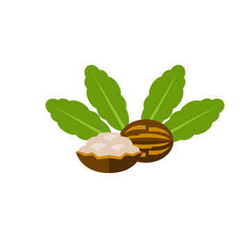 Cracked shea nuts vector icon