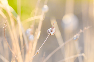 Snail on green grass. The shell of a snail on a stalk of grass.