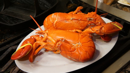 twin gourmet lobsters sitting on a plate
