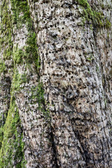 Tree bark showing moss and holes from boring insects, vertical aspect