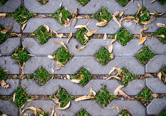 green grasses in  holes of paving blocks with yellow seeds at autumn. background, pattern, texture.