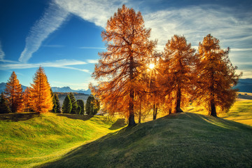 Aerial autumn sunrise scenery with yellow trees, fall landscape