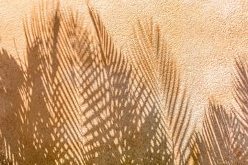 ombres de palmes sur mur en crépi ocre