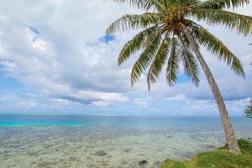 Cocotier et lagon