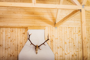 antlers in a barn