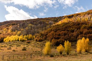 Landschaft im Südwesten der USA im Herbst