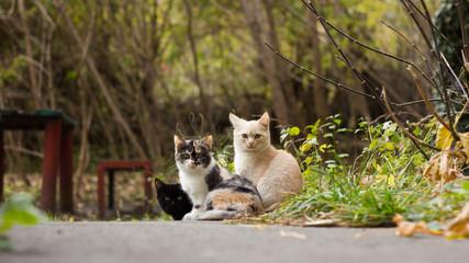 Cat's family