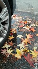Autunno per le strade - foglie colorate