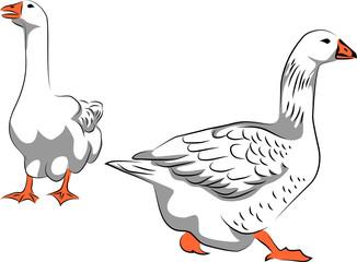 Goose - vector illustration