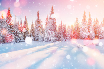 Photo sur Aluminium Glisse hiver Mysterious winter landscape majestic mountains in winter. Magical winter snow covered tree. Photo greeting card. Bokeh light effect, soft filter