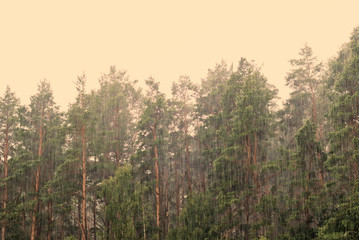 Trees under a pouring rain. To a photo color tinting is applied