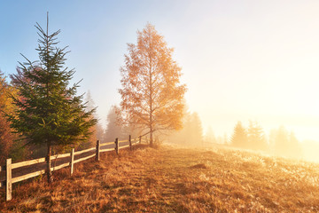 Shiny tree on a hill slope with sunny beams at mountain valley covered with fog. Gorgeous morning scene. Red and yellow autumn leaves. Carpathians, Ukraine, Europe. Discover the world of beauty