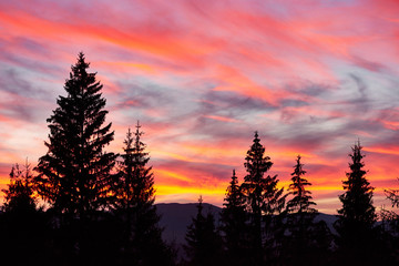 Majestic sky, pink cloud against the silhouettes of pine trees in the twilight time. Carpathians, Ukraine, Europe. Discover the world of beauty