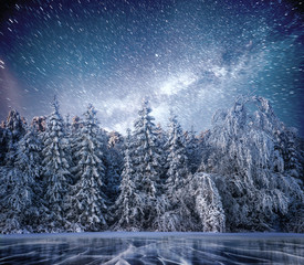 magical winter snow covered tree. Winter landscape. The winter lake is frozen on the front
