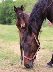 Newborn Horse With Mother