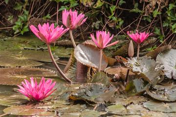 Fototapeten Blumenhändler Bloemen onderweg naar de Mekongdelta