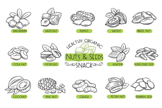Set vector icons nuts and seeds.