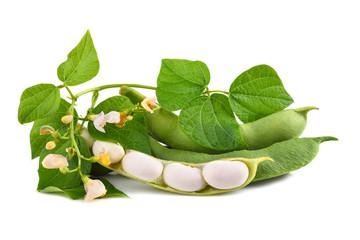 Green beans in pod