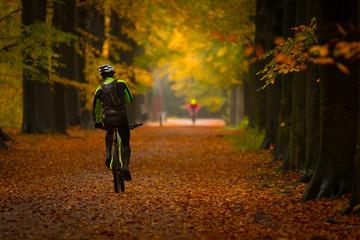 biker on mountain bike in forest in autumn