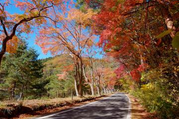 世界遺産 富士山の秋