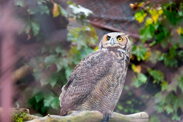 Big one eyed owl sitting on a branch