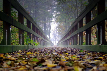 drewniany pomost w jesiennym lesie nad jeziorem