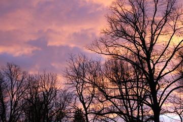 Abendrot hinter Bäumen bei Sonnenuntergang lila rosa