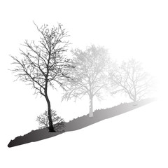Realistic trees silhouette in the fog (Vector illustration).