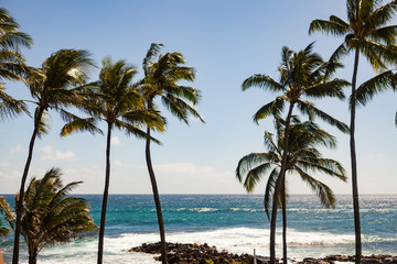 Palm trees blow in the wind off the coast of Kauai, Hawaii