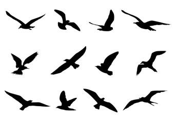 silhouette bird shape vector design