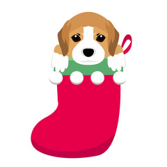 New Year Icon dog breed . The puppy sits in a Christmas sock.