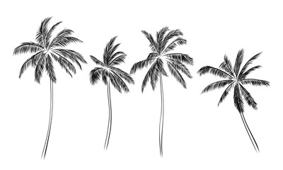 Group of palm trees vector silhouettes