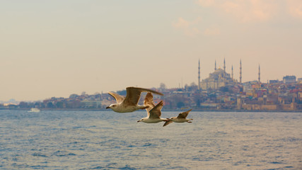 Seagulls flying in a sky with a mosque at the background
