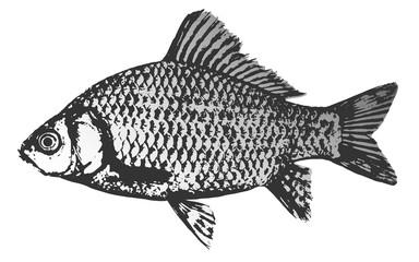 Fish crucian silhouette icon, vector illustration