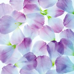 fondo de pétalos de flor azulados