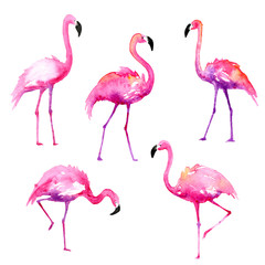 Set of Hand-Painted Watercolor Flamingos