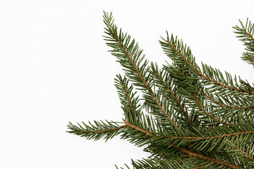 Green evergreen needle branch in studio isolated on white. Empty copy space christmas background.