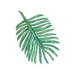 Palm leaf tropical greenery.