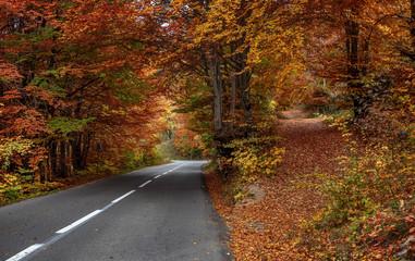 Asphalt road in the woods in autumn