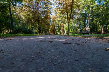Betonowa ścieżka w parku miejskim, Kielce, Polska