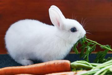 White fluffy rabbit eats lush green foliage of carrots